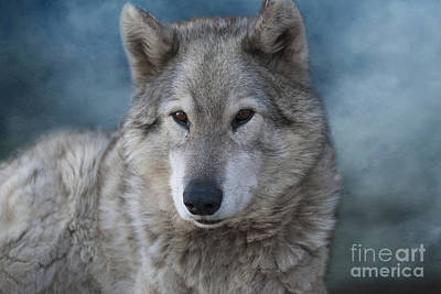 Timber Wolf Photograph - Wolf by Juli Scalzi