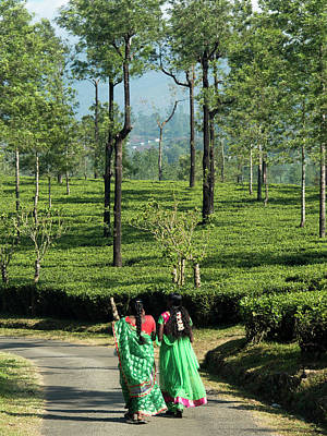 Tea Garden Photograph - Women Walking On Path Amid Tea Estate by David H. Wells