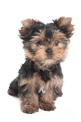 Wonderful Puppy Original