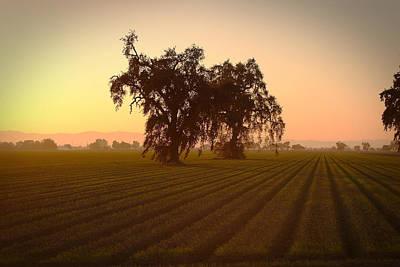 Photograph - Woodland Mist by Robert Melvin