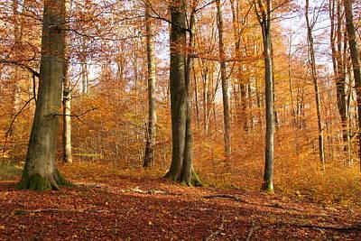 Buche Photograph - Woodland by Wello Karron