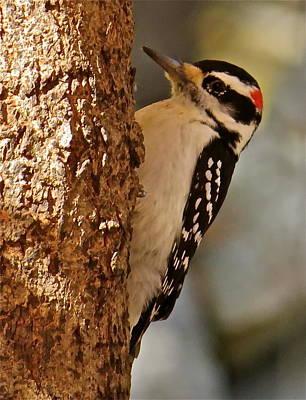 Woodpecker 109 Art Print by Patsy Pratt