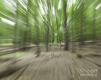 Photograph - Woods by Ronald Grogan