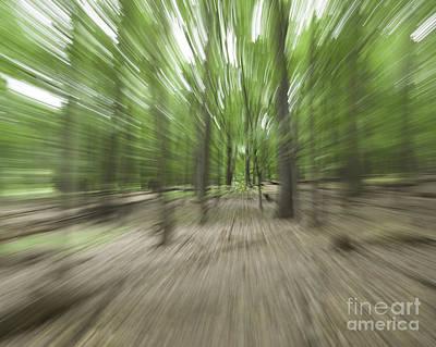 Photograph - Woods by Ronald Grogan