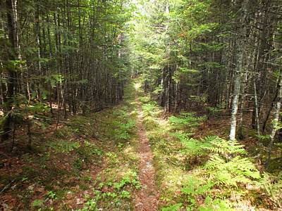 Photograph - Woods Trail by Gene Cyr