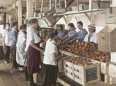 Photograph - World War I Farmerettes Packing Peaches by Stocktrek Images