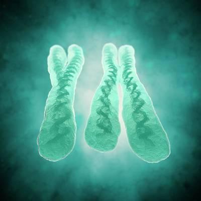 X And Y Chromosome Art Print by Andrzej Wojcicki