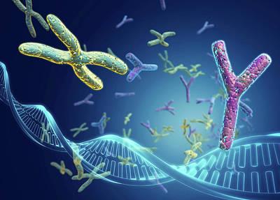 X And Y Chromosomes Art Print by Harvinder Singh
