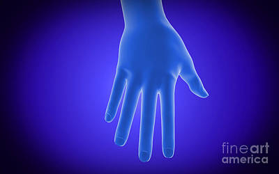 Dimensional Detail Digital Art - X-ray View Of Human Hand by Stocktrek Images