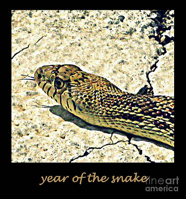 Photograph - Year Of The Snake by Patricia Januszkiewicz