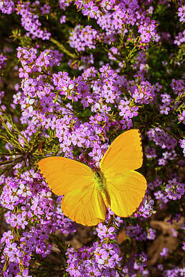 Yellow Butterfly On Pink Flowers Art Print by Garry Gay