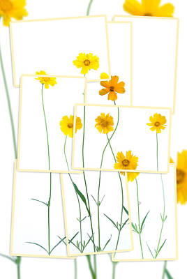 Photograph - Yellow Daisies by Alexey Stiop