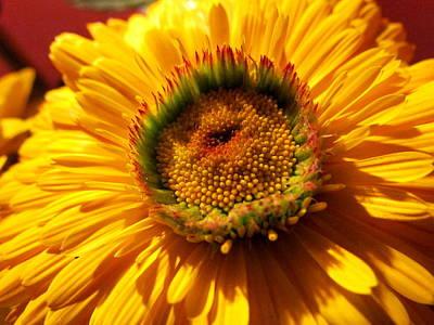 Yellow Flower Art Print by Joyce Woodhouse