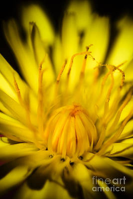 Photograph - Yellow Flower Macro by Jorgo Photography - Wall Art Gallery