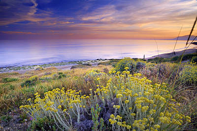 Yellow Flowers At The Sea Art Print by Guido Montanes Castillo