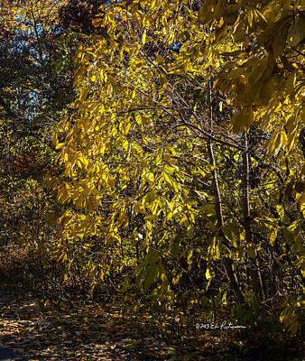 Photograph - Yellow Leaves by Edward Peterson