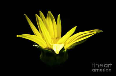 Photograph - Yellow by Ronald Grogan