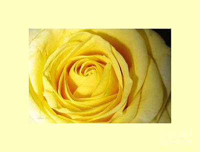Photograph - Yellow Rose by Oksana Semenchenko
