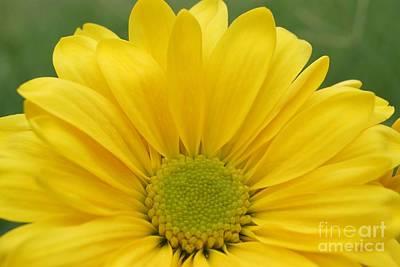 Photograph - Yellow Softness by Kerri Mortenson
