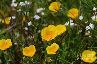 Monets Water Lilies Rights Managed Images - Yellow Wildflower 2.1559 Royalty-Free Image by Stephen Parker