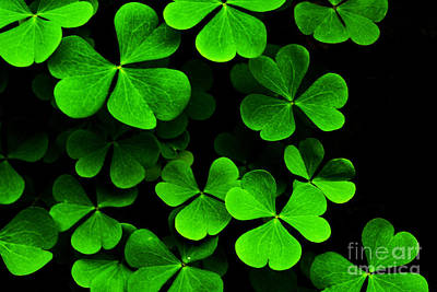 Sour Photograph - Yellow Wood Sorrel by Thomas R Fletcher