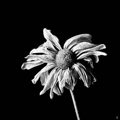 Pellegrin Photograph - Yesterday's Daisy by Scott Pellegrin