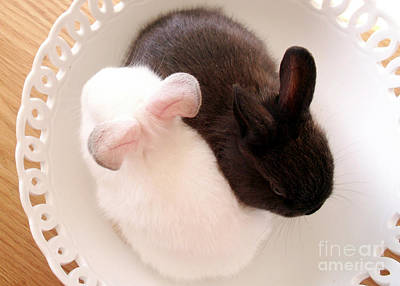 Photograph - Yin Yang Bunnies by Valerie Reeves