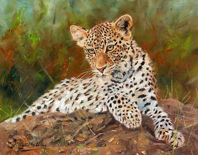 India Wildlife Painting - Young Leopard by David Stribbling
