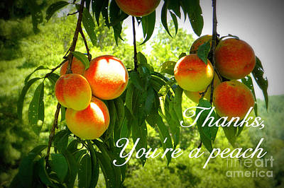 Photograph - You're A Peach by Valerie Reeves