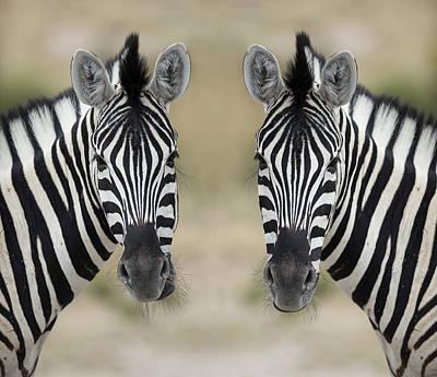Symmetry Photograph - Zebras by Franz Aberham