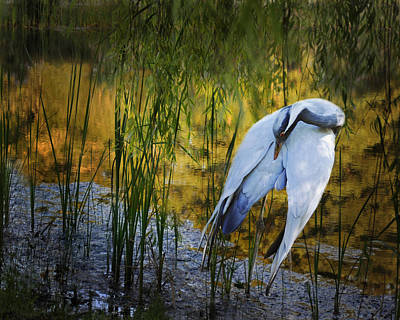 Photograph - Zen Pond by Melinda Hughes-Berland