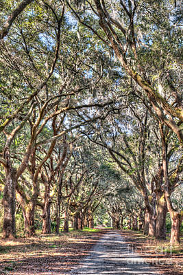 Photograph - Allee Of Oaks Drive by Dale Powell