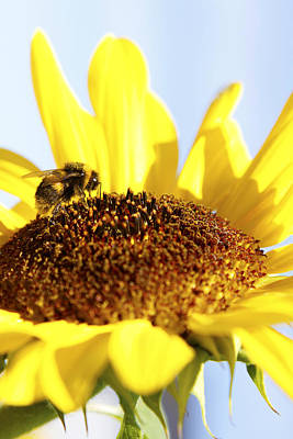 Pollinate Photograph - Bee On Flower by Les Cunliffe