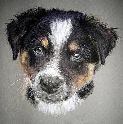 Border Collie Dog Portrait Art Print by Olde Time  Mercantile
