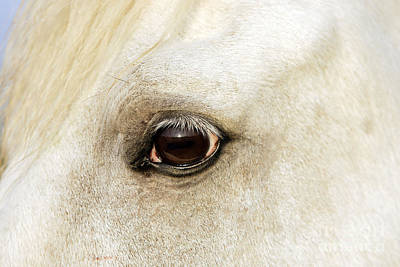 Photograph - Camargue Horse by M Watson