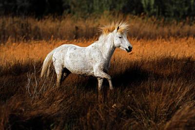 Adam Photograph - Camargue Horses Running Through Marshy by Adam Jones