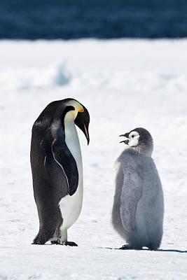 Aptenodytes Forsteri Photograph - Cape Washington, Antarctica by Janet Muir