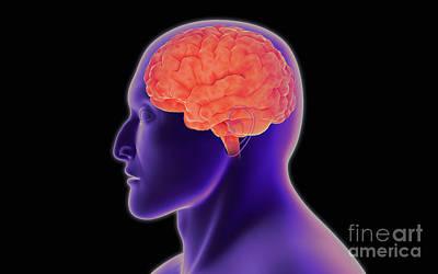 Human Brain Digital Art - Conceptual Image Of Human Brain by Stocktrek Images