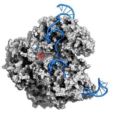 Crispr-cas9 Gene Editing Complex Art Print by Molekuul