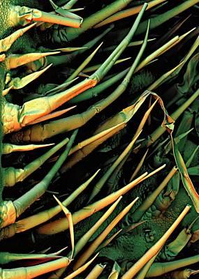 Cucumber Leaf Trichomes Art Print