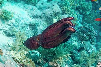 Octopuses Photograph - Day Octopus by Georgette Douwma