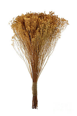 Photograph - Dry Flowers Bunch by Olivier Le Queinec