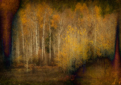 Fall At Sheep Creek Art Print