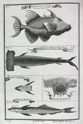 Hammer Photograph - Fish by British Library