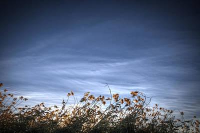 Photograph - 10 Foot High Grass by Robert Melvin