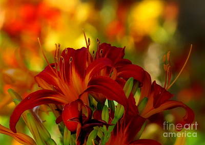 Photograph - Hemerocallis by France Laliberte
