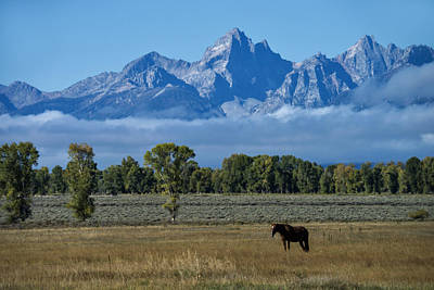 Photograph - Horse In Grand Teton National Park, Wy by Mark Newman