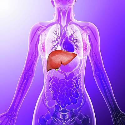 Human Liver Art Print by Pixologicstudio