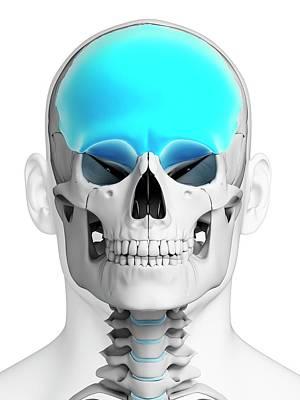 Frontal Bones Photograph - Human Skull by Sebastian Kaulitzki