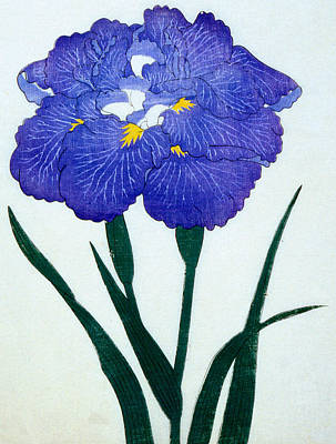 Iris Painting - Japanese Flower by Japanese School